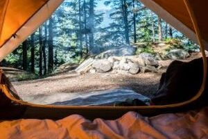 annuaire camping